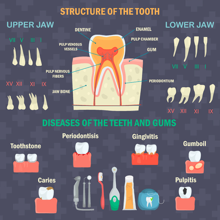 Tooth structure. Types of human teeth. Teeth diseases and hygiene products. Dental infgraphics set