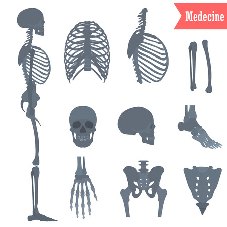 Set of different parts human skeleton icons for web and mobile design Illustration