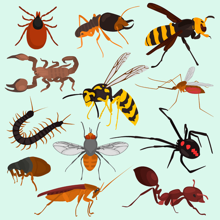 Set pf dangerous insects color flat icons