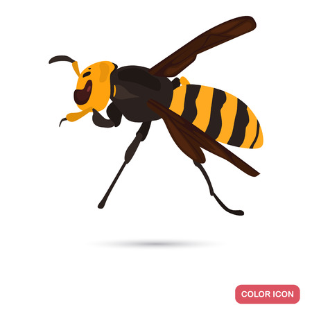 Azian wasp color flat icon for web and mobile design