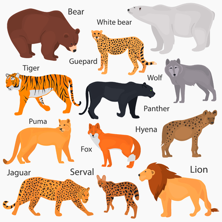 Set of wild predators with their names color flat icons