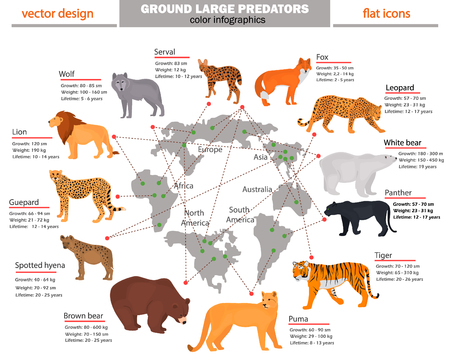 Wild predators, their habitat, growth, weight and longevity color infographics Stock Vector - 87713376