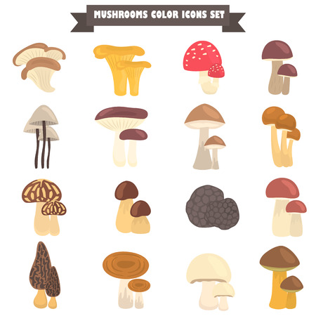 Set of edible and poison mushrooms color flat icons
