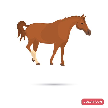 Dons horse color flat icon