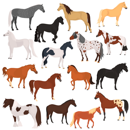 Horse breeds color flat icons set