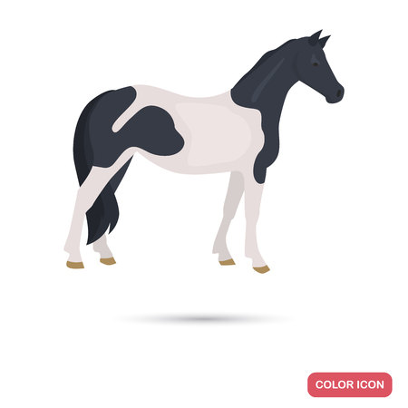 Pinto horse color flat icon