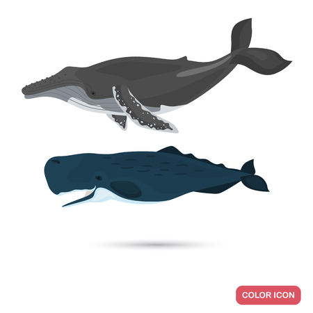 Humpback and sperm whales color flat icons set