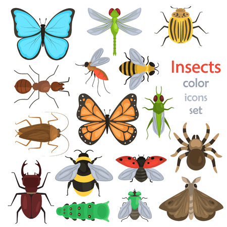 Set of different insects color flat icons isolated on plain background.