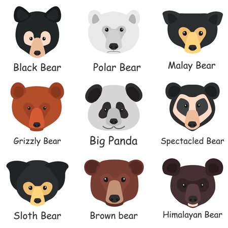 Set of different bear muzzles with names color flat icons
