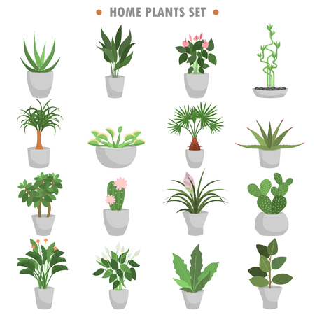 Different green home plants color flat icons set.