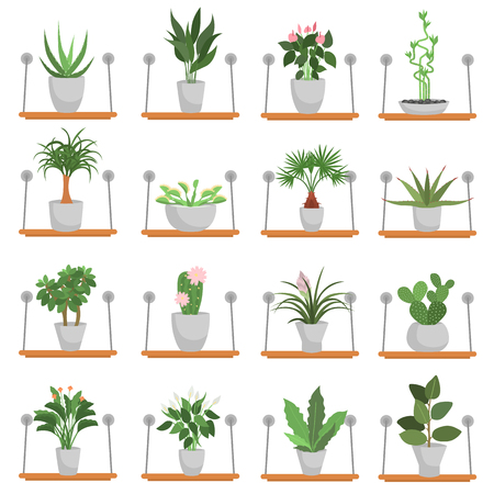 Different green homeplants standing on wooden shelves color flat icons set