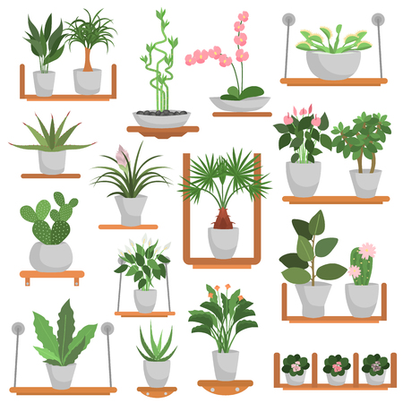 Different green homeplants standing on wooden shelves color flat icons set Banque d'images - 98089236