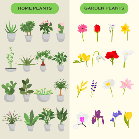 Home and garden flowers color flat icons set