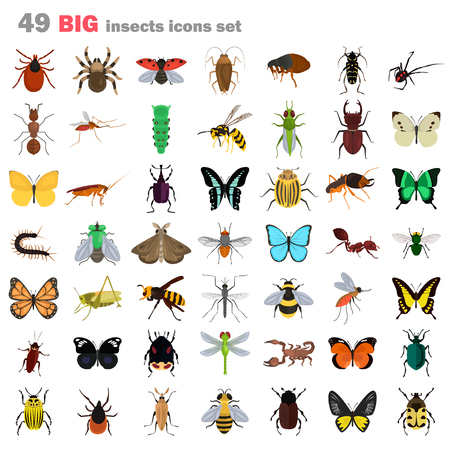 Big insects color flat icons set