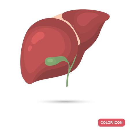 Human liver and gallbladder color flat icon