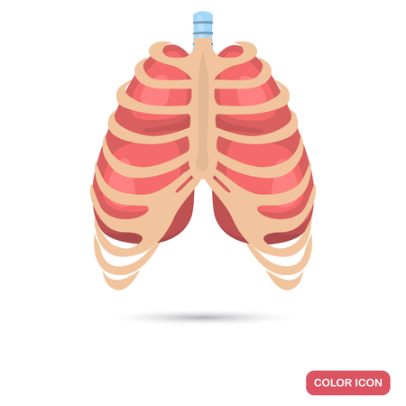 Human lungs behind the thorax color flat icon