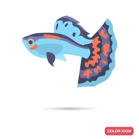 Guppy aquarium fish color flat icon
