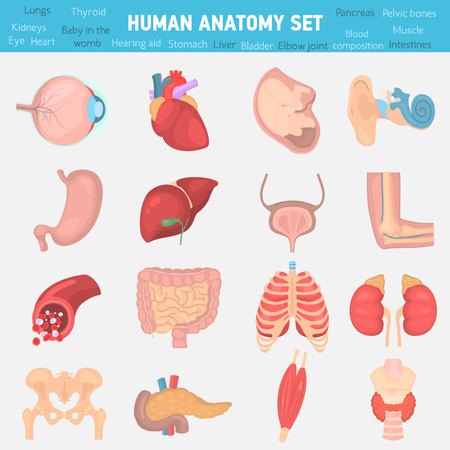 Human anatomy color flat icons set