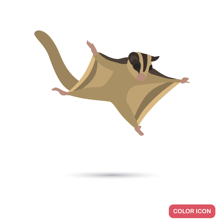 Flying squirel clor flat icon for web and mobile design