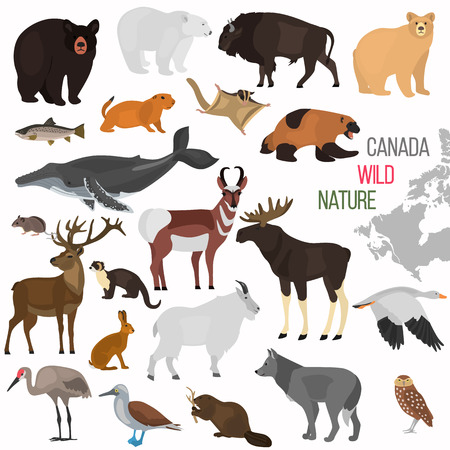 Wild animals of Canada color flat icons set