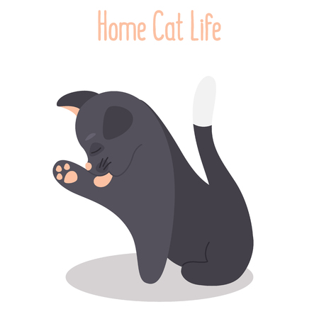 The cat licks its paw color flat icon
