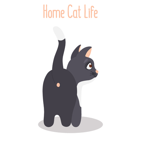 The cat turned backwards color flat icon