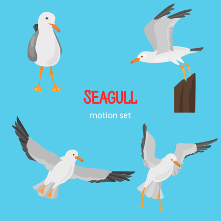Seagull bird in dufferent motions color flat icons set