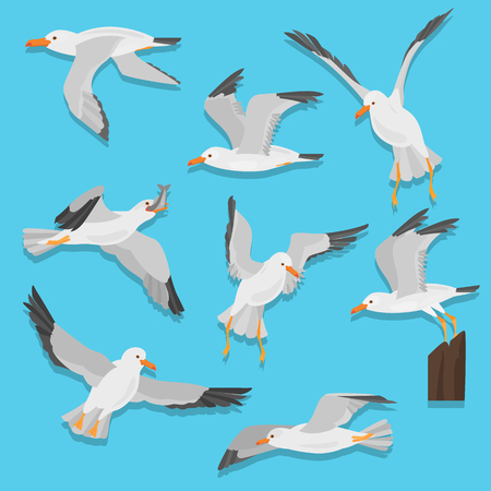Seagull bird in dufferent motions color flat icons set Zdjęcie Seryjne - 114863512