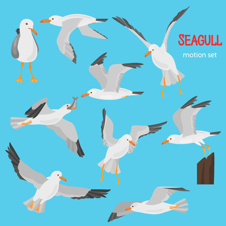 Seagull bird in dufferent motions color flat icons set Zdjęcie Seryjne - 114863513