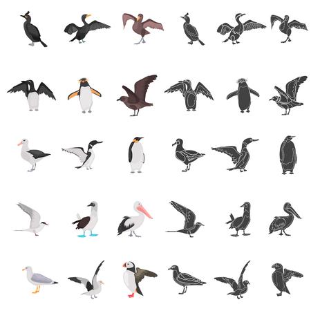 Different sea birds color flat, simple concept icons set