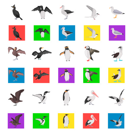 Different sea birds color flat icons set