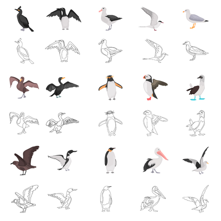 Different sea birds color flat and line concept icons set