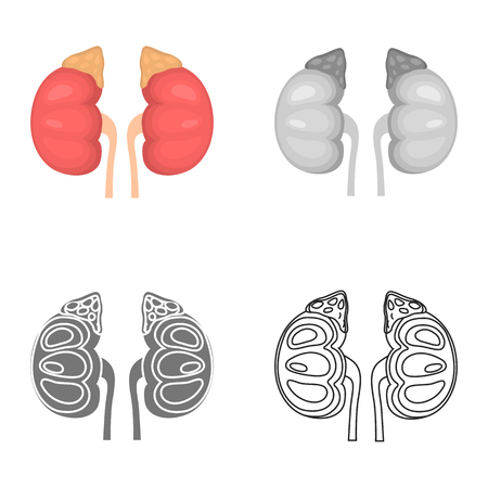Human kidney color flat, line, simple and monochrome icon set