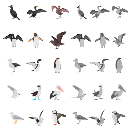 Different sea birds color flat, black and white colors concept icons set Illustration