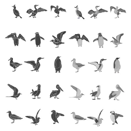 Different sea birds simple, black and white colors concept icons set Illustration