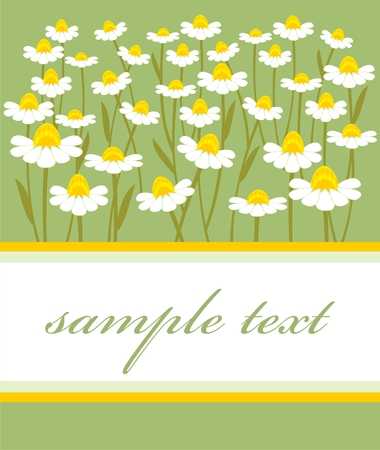 postcard with a picture of chamomile field Stock Vector - 8289540