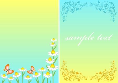 chamomile  postcard  Vector