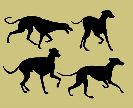 hunting dog: silhouettes of greyhounds