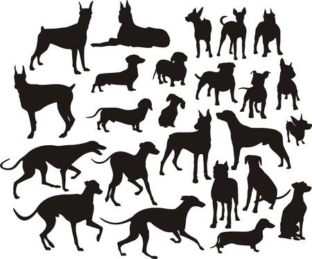 boxer dog: silueta de los perros