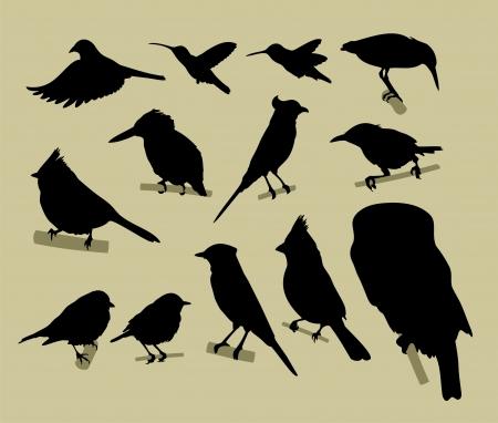 birds  silhouette: silhouette of birds