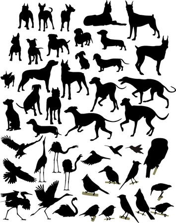 silhouette of dogs and birds Vector