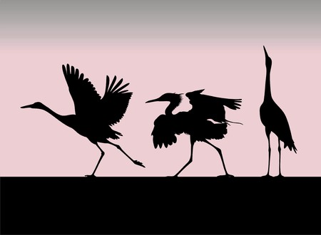 silhouette of the birds Vector