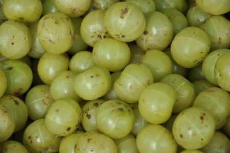 grosella: grosella espinosa india Foto de archivo