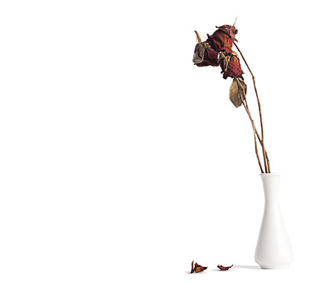 Dry rose in a vase on a white background.