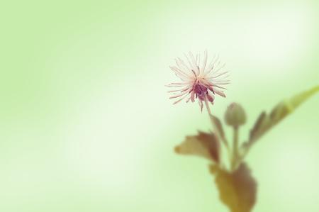 pollen: Grass pollen white background. Stock Photo