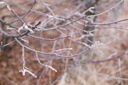 Tree branches covered with hoarfrost on cold winter morning