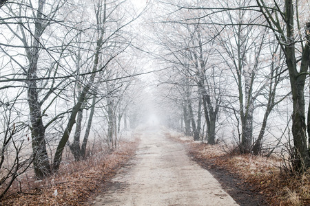 Beautiful winter road on a foggy day photo