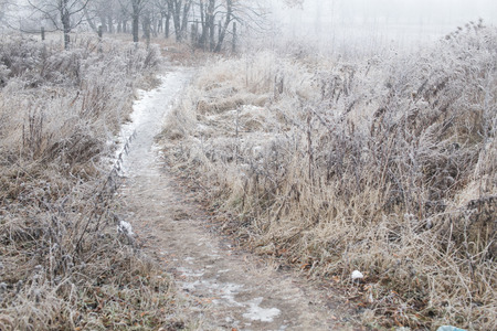 Icy path in the field on a foggy winter day photo