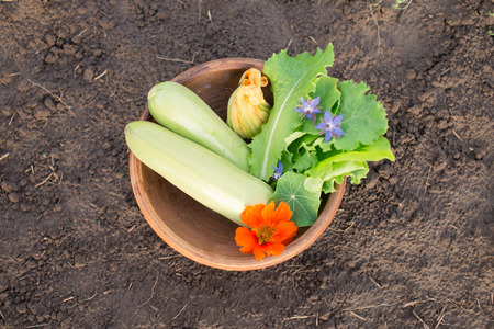 edible leaves: Bowl of freshly picked vegetables on the ground. Organic farming and gardening. Edible flowers on top of zucchini and lettuce leaves. Vegetarian and raw food. Healthy lifestyle.