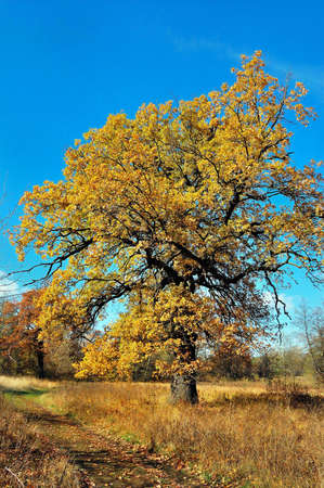tree by autumn to prepare to winter